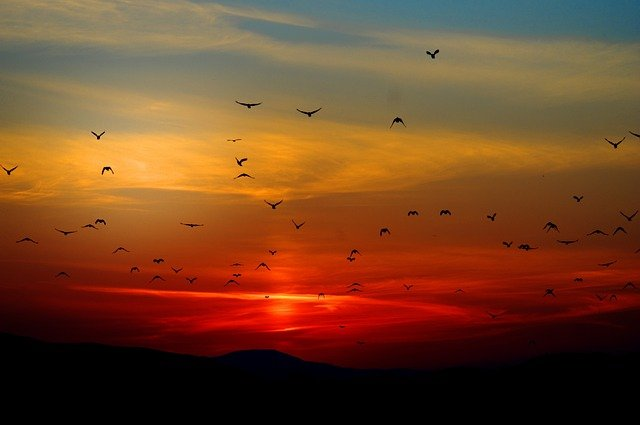 Mountains, Birds, Silhouette, Sunset, Dusk, Dawn