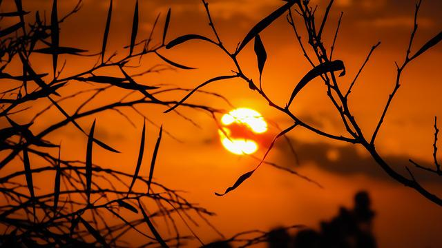 Branches, Sunset, Silhouettes, Dusk, Twilight