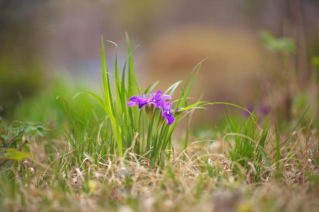 Nature, Grass, S, Hayfields, Flowers, Each Time Vary