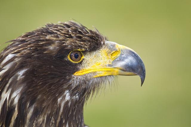 Bird Of Prey, Eagle, Bird, Zoo, Beak