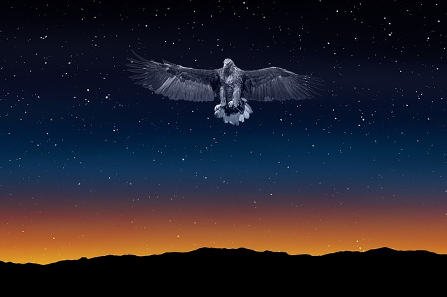 Eagle, Night Sky, Freedom, Illuminated, Night, Sky