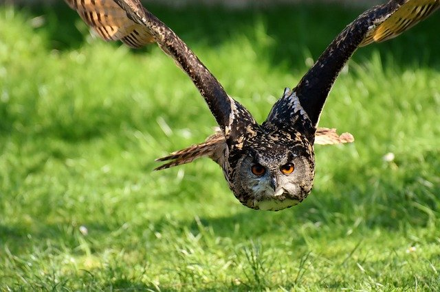 Owl, Bird, Feather, Eagle Owl, Animals, Wild Bird, Head
