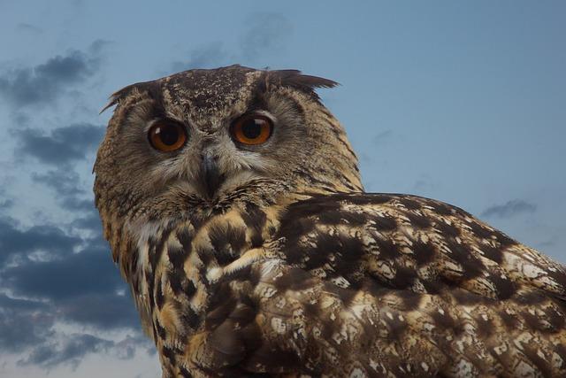 Bird, Owl, Wild Bird, Long Eared Owl, Eyes, Eagle Owl