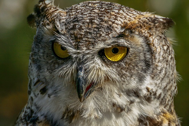 Owl, Bird, Eagle Owl, Close Up, Bill, Bird Of Prey
