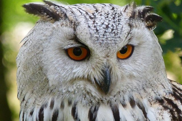 Owl, Bird, Animal, Eagle Owl