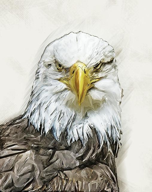 Eagle, Bird, Nature, Beak, Predator, Symbol, Freedom