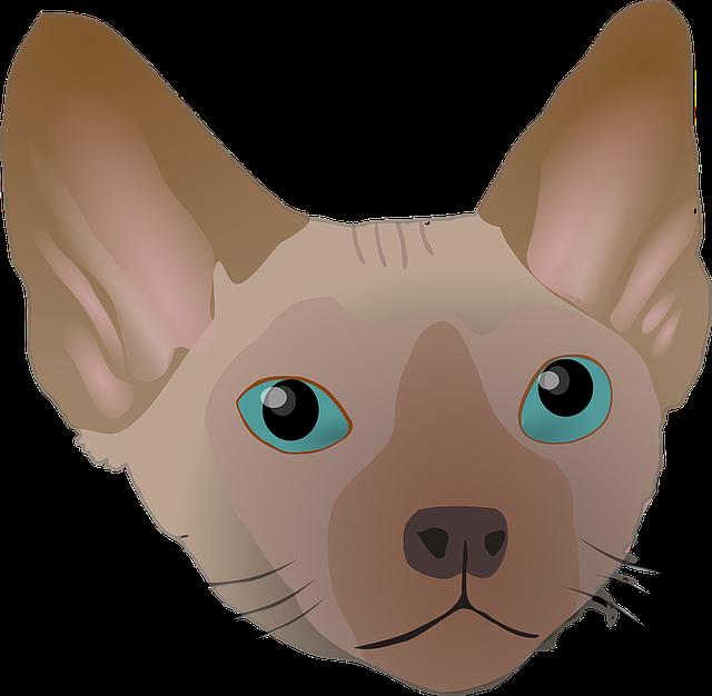 Big, Cat, Devon Rex, Ear