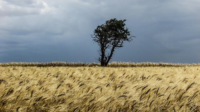 Cyprus, Perivolia, Ear, Field, Golden, Tree, Clouds