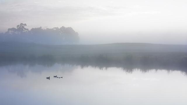 Duck, Pond, Serene, Fog, Mist, Early Morning, Lake