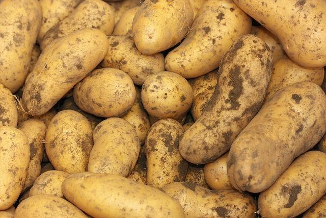Potatoes, Solanum Tuberosum, Herdöpfel, Earth Apple