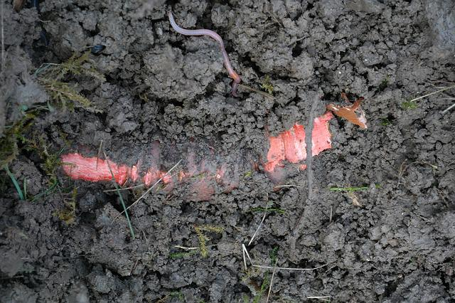 Root, Earth, Red, Plant, Ground, Earthworm, Iris