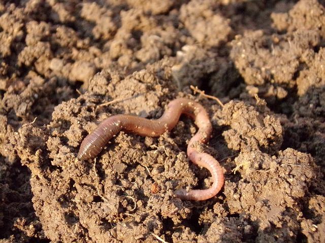 Earthworm, Soil, Dirt, Macro