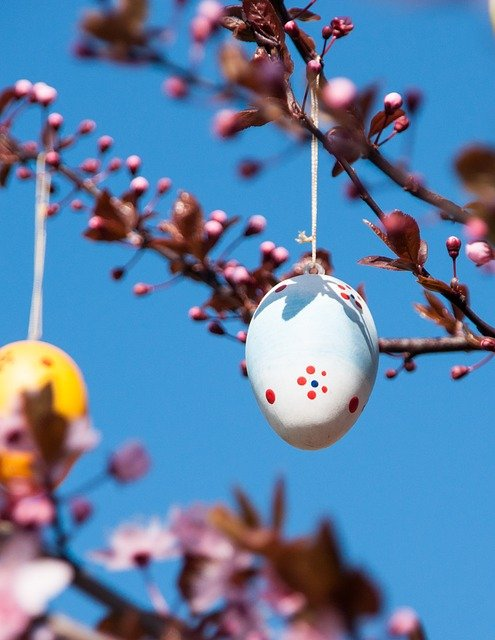 Easter, Easter Egg, Branch, Blue, Pink, Cherry, Colored