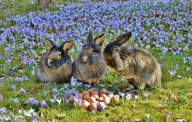 Rabbit, Easter, Easter Bunny, Chicken Eggs, Crocus