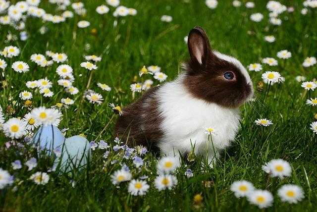 Easter, Rabbit, Mammal, Easter Bunny, Animal World