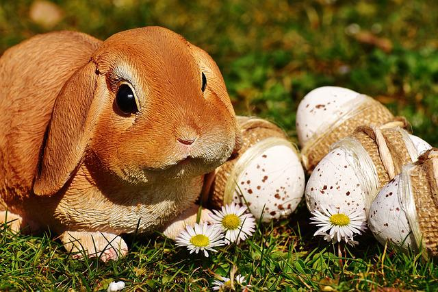Easter, Easter Bunny, Egg, Easter Eggs, Meadow, Spring