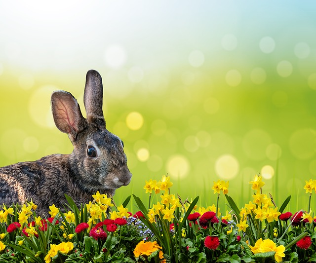 Rabbit, Hare, Easter, Grass, Osterglocken, Spring
