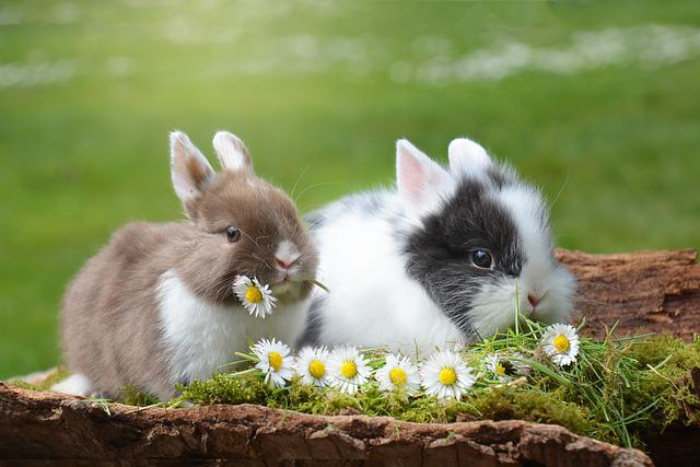 Rabbit, Easter, Hare, Mammal, Nature, Easter Bunny