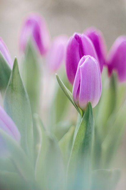 Nature, Plant, Flower, Bright, Tulip, Easter, Floral