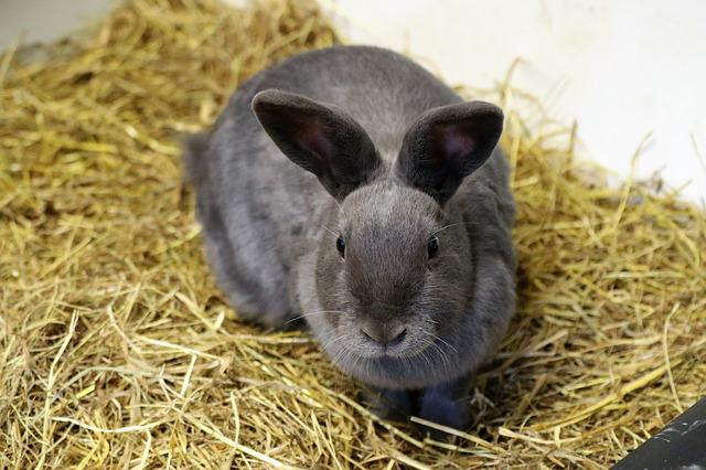 Rabbit, Bunny, Easter, Animal, Cute, Pet, Fluffy