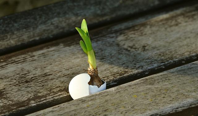 Onion, Scion, Live New, Easter, Resurrection, Egg