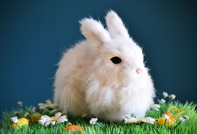 Cute, Rabbit, Small, Easter, Spring, White, Knuffig