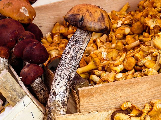 Mushrooms, Food Mushrooms, Mushroom, Eat, Forest, Cep