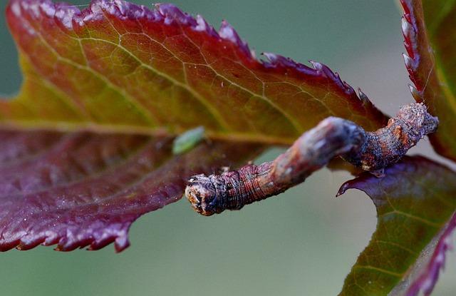Caterpillar, Rosenblatt, Garden, Pest, Eat