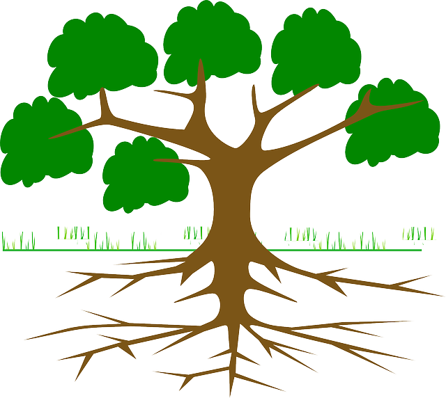 Tree, Branches, Root, Eco, Ecology, Nature, Plant