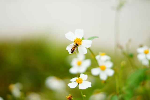 Bee, Flowers And Plants, Ecology