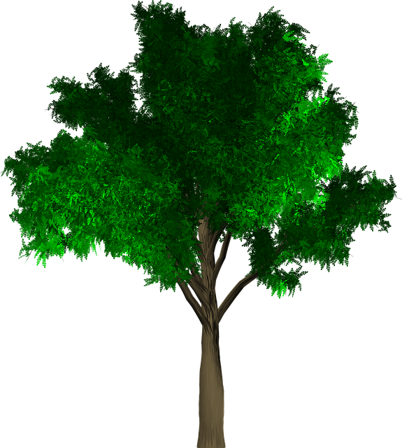 Tree, Isolated, Leaf, Green, Foliage, Branch, Ecology