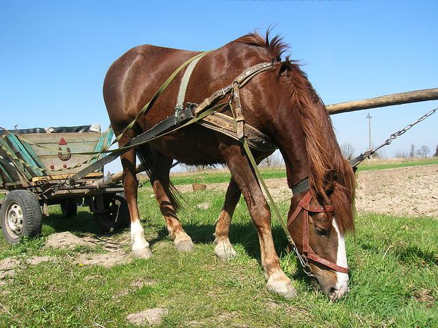 Horse, Wagon, Village, Selskoe, Economy, Plowing
