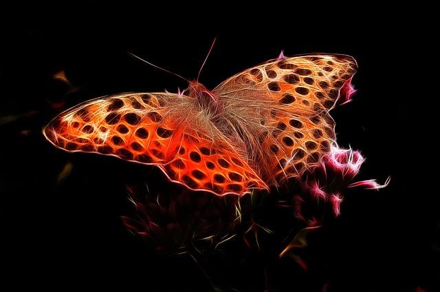 Fractalius, Fiery Mother-of-pearl Moth, Edelfalter