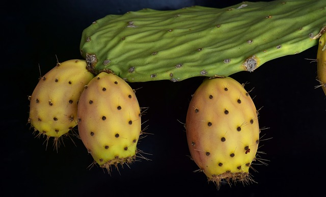 Cactus, Prickly Pear, Spur, Arid, Dry, Drought, Edible