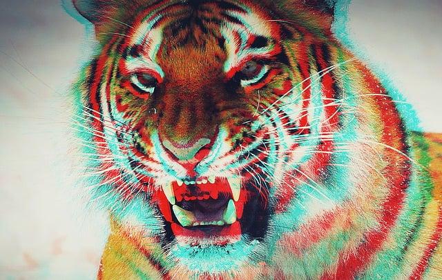 Three Dimensional, Animal, Tiger, Effects, Asymmetric