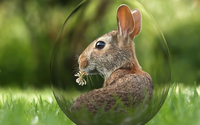 Easter, Holiday, Spring, Egg, Bunny