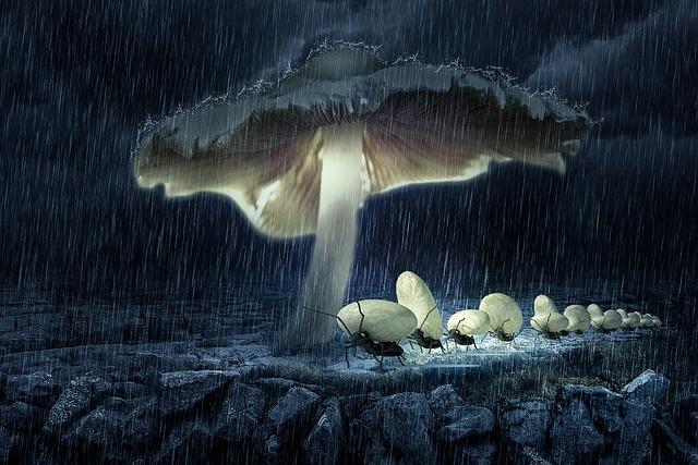 Fantasy, Mushroom, Ants, Egg, Hike, Light, Night, Mood