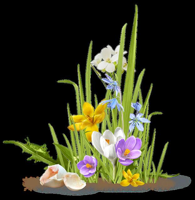 Spring, Flower, Crocus, Saffron, Grass, Shell, Egg