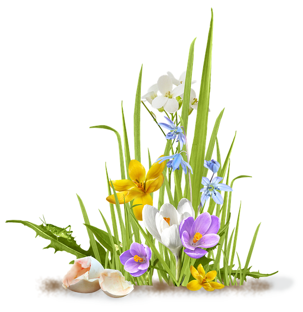 Spring, Flower, Crocus, Saffron, Grass, Shell, Egg