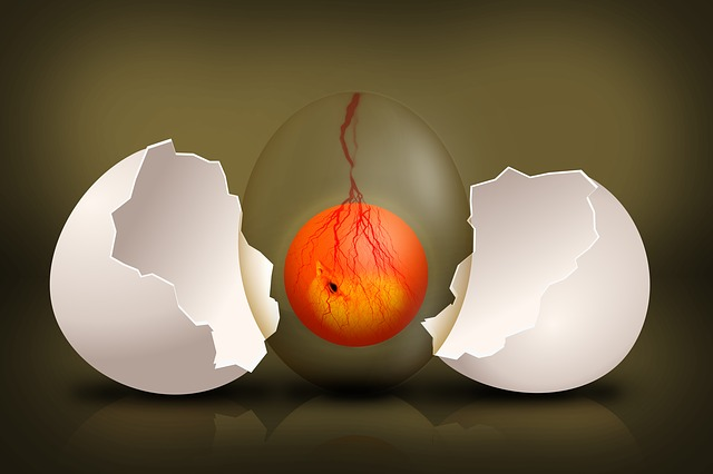 Embryo, Chicks, Egg, Evolution, Development, Eggshell