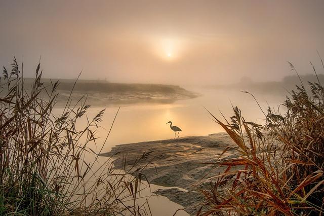 Heron, Egret, Landscape, Feathers, Nature, Wings