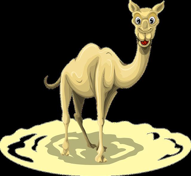 Camel, Animal, Egypt, Desert, Nature, Africa, Sahara