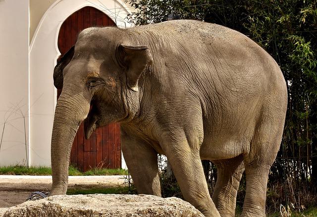 Elephant, Proboscis, Pachyderm, Animal, Animal Portrait