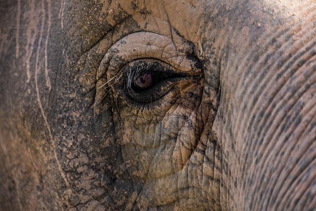 Elephant, Close Up, Eye, Asian Elephant, Nature, Animal