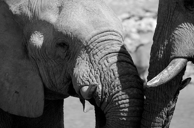 Elephant, Black And White, Africa, Wild Animal, Namibia