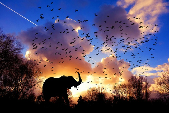 Elephant, Birds, Morning, Africa, Jungle, Sky, Cloud