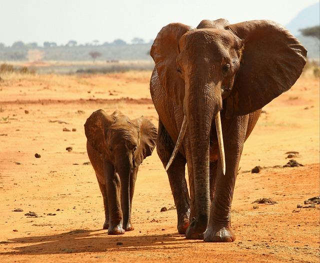 Elephant, Africa, National Park