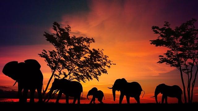 Elephant, Africa, Savannah, Serengeti