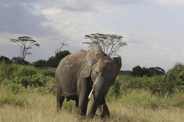 Elephant, Africa, Tanzania, Kilimanjaro, Travel