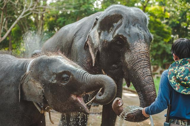 Thailand, Elephant, Small, Child, Drinks, Water, Bathes